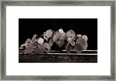 Aspen Framed Print by Algirdas Gelazius