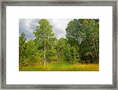 Framed Print featuring the photograph Aspen And Others by Jim Thompson