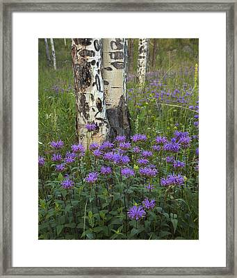 Aspen And Wildflowers Framed Print by Gary Langley