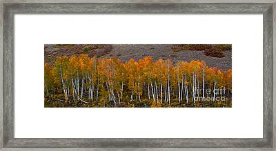 Framed Print featuring the photograph Aspen Band by Steven Reed