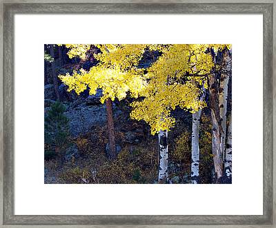 Aspen Bright Framed Print