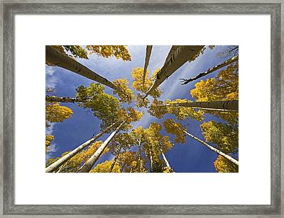 Aspen Color Framed Print by Sue Cullumber