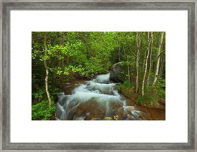Aspen Creek Framed Print by Darren  White