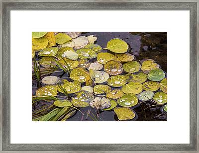 Framed Print featuring the photograph Aspen Drops by Darrell E Spangler