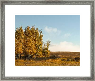Aspen Fog Framed Print by Curtis Stein
