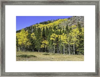 Aspen Foliage Framed Print by Tom Wilbert