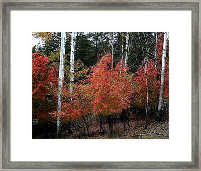 Aspen Glory Framed Print