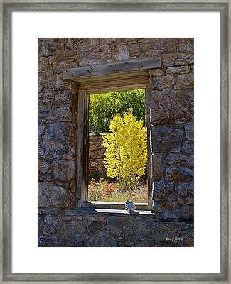 Aspen Gold Through Time Framed Print