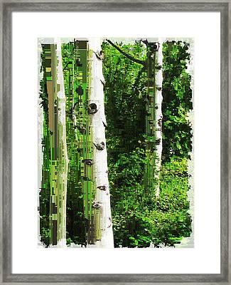Aspen Grove 2 Framed Print by Tim Allen