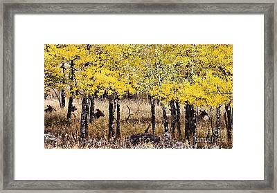 Aspen Grove Afternoon Framed Print