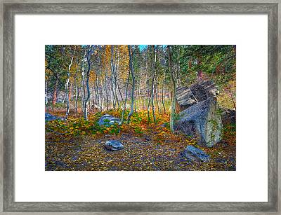 Framed Print featuring the photograph Aspen Grove by Jim Thompson
