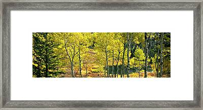 Aspen Grove, Moose Ponds, Grand Teton Framed Print by Panoramic Images