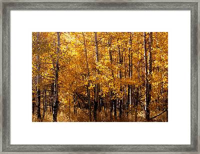 Aspen Grove Tahoe City Framed Print