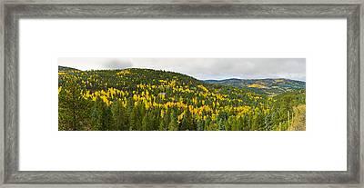 Aspen Hillside In Autumn, Sangre De Framed Print