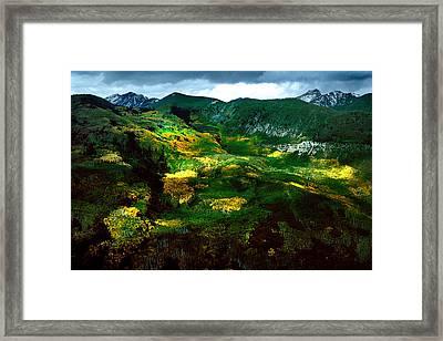 Aspen In Autumn Gold Framed Print