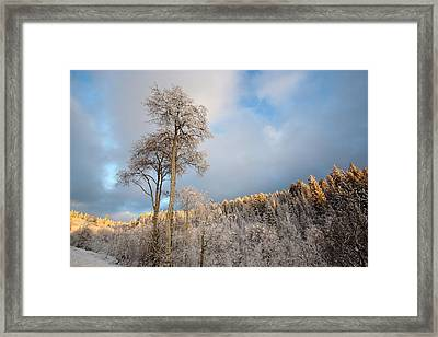 Aspen In Blue Framed Print