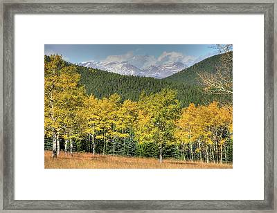 Aspen In Fall Mt Evans Framed Print