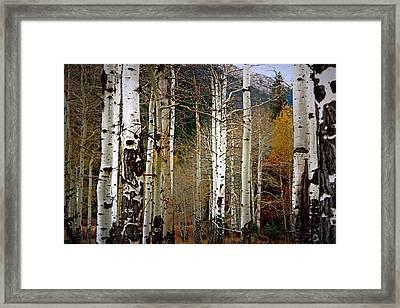 Aspen In The Rockies Framed Print by Lynn Sprowl