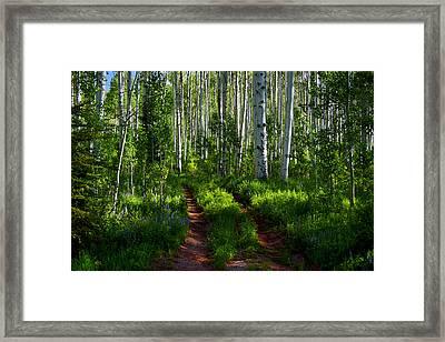 Aspen Lane Framed Print
