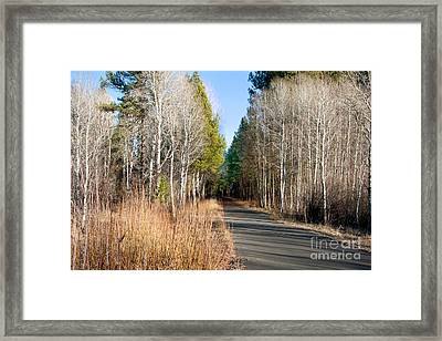 Aspen Lane Framed Print