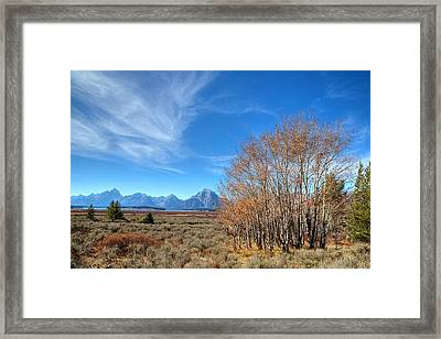 Framed Print featuring the photograph Aspen Last Stand  by David Andersen