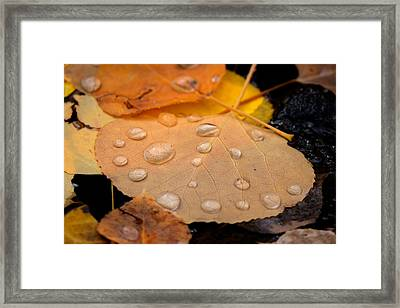 Aspen Leaf With Water Drops Framed Print