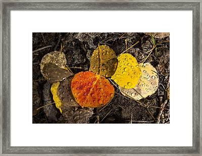 Aspen Leaves On Bishop Creek Framed Print