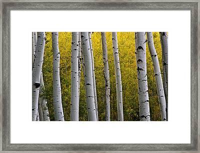 Aspen Light 3 Framed Print by Dave Dilli