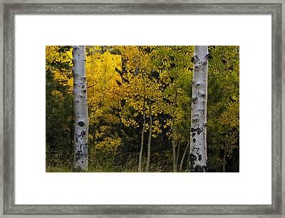 Aspen Light Framed Print by Dave Dilli