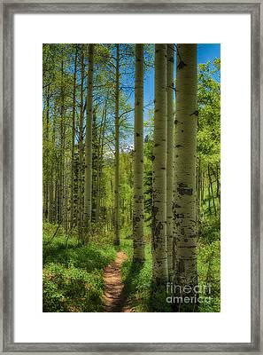 Aspen Lined Hiking Trail Hdr Framed Print by Mitch Johanson