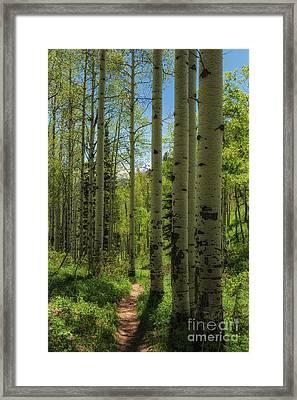 Aspen Lined Hiking Trail Framed Print by Mitch Johanson