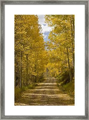 Aspen (populus Sp.), Usa Framed Print