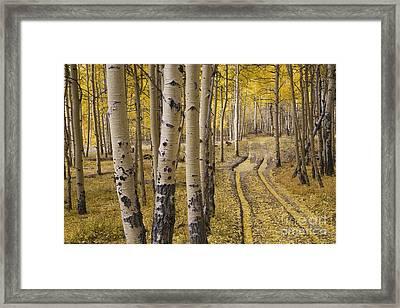 Aspen Road, Co Framed Print by Sean Bagshaw