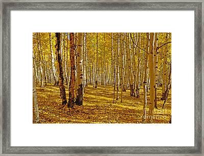 Aspen Sanctuary Framed Print