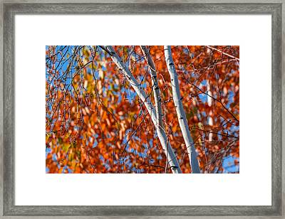 Framed Print featuring the photograph Aspen by Sebastian Musial
