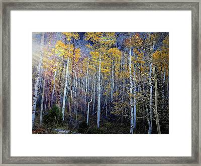 Aspen Sunset Framed Print
