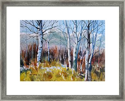Aspen Thicket Framed Print by Kris Parins
