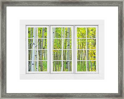 Aspen Tree Forest Autumn Time White Window View  Framed Print