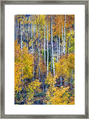 Aspen Tree Magic Cottonwood Pass Framed Print by James BO  Insogna