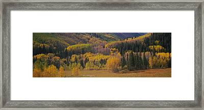Aspen Trees In A Field, Maroon Bells Framed Print by Panoramic Images