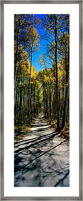 Aspen Trees In A Forest, Californian Framed Print by Panoramic Images