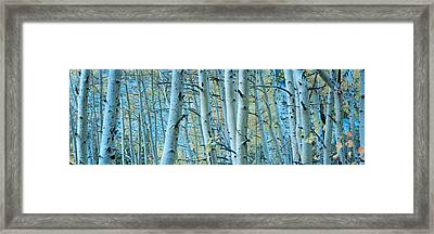 Aspen Trees In A Forest, Rock Creek Framed Print