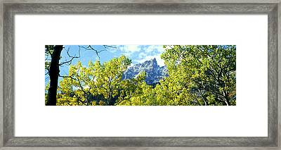 Aspen Trees In A Forest With Mountains Framed Print by Panoramic Images