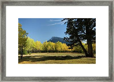 Aspen Trees In Autumn, Mount Rundle Framed Print