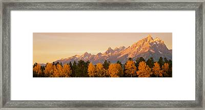 Aspen Trees On A Mountainside, Grand Framed Print by Panoramic Images