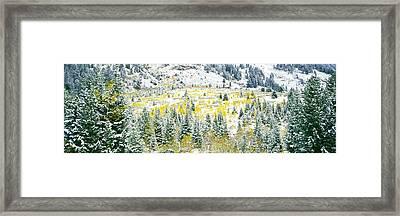 Aspen Trees On Mountain Framed Print
