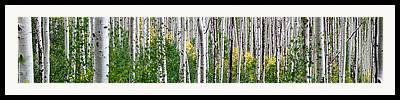 Aspen Photographs Framed Prints