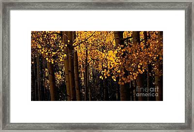 Aspen Woods Framed Print
