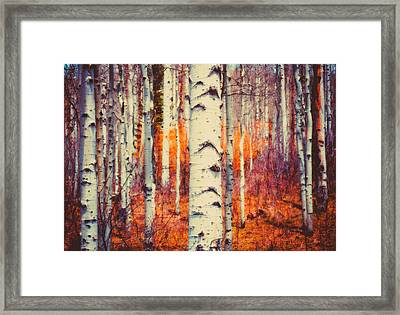 Aspenglow Framed Print by Roger Chenery
