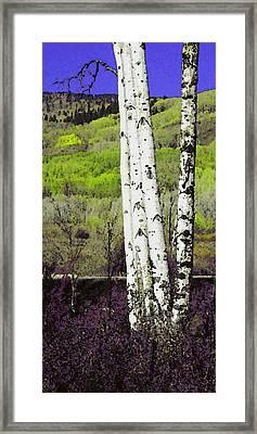 Aspens 4 Framed Print
